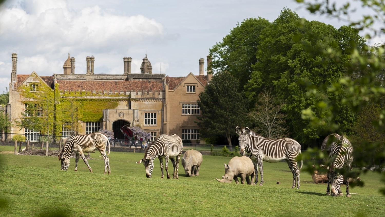 Marwell Zoo - Grevy's Zebra and rhino